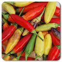 Hot-puria-pepper