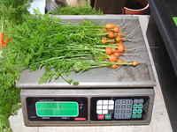 Micro_carrots